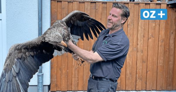 Vogelrettungsstation im Greifswalder Tierpark rettet Seeadler