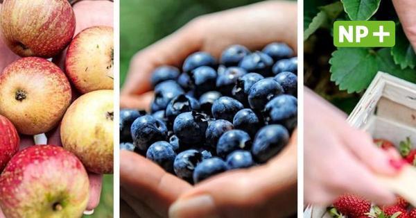 Hannover: Gratis-Streuobstwiesen, Erdbeerplantagen - hier ernten Sie selber