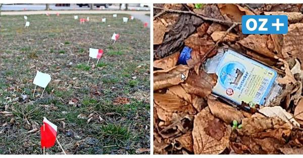 Reihenweise Schnapsflaschen im Gebüsch in Putbus: Müllsammlerin macht Video