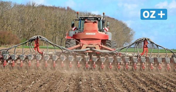 Maisanbau auf Rügen: Mit dieser Maschine ist das Säen ein Kinderspiel