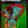 The effect of young and old ex vivo human serum on cellular protein synthesis and growth in an in vitro model of ageing | American Journal of Physiology-Cell Physiology