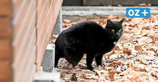 Usedom: Katze verliert Bein: Wolgaster Verein rettet Tier