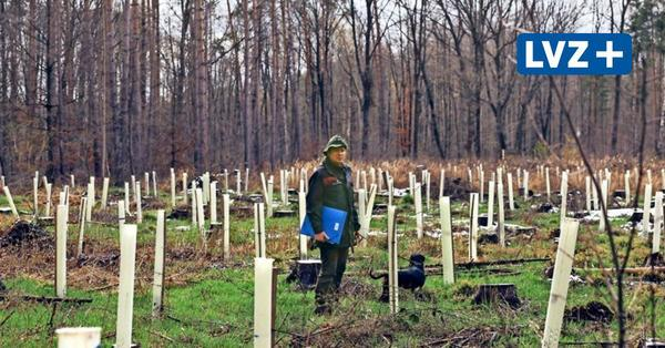 Im Leipziger Südraum: Ein Förster baut seinen Wald um und trotzt dem Klimawandel