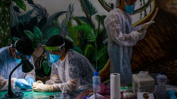 Scientists scour the Amazon for pathogens that could spark the next pandemic | Science | AAAS