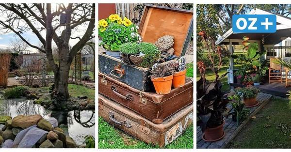 Schönster Garten in MV gesucht: Diese grünen Oasen liegen vorn – Jetzt noch abstimmen
