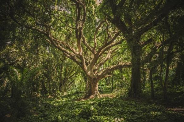Onderschat nooit de intelligentie van bomen. 'Wortelnetwerken functioneren als zenuwstelsels'