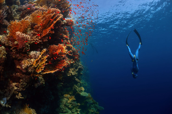 Discover Magical Freediving In Cape Town