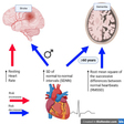 Autonomic Imbalance and Risk of Dementia and Stroke The Framingham Study