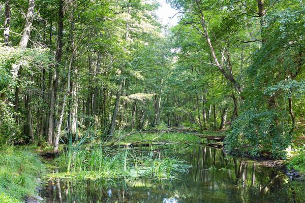 Idylle pur: Das Briesetal bei Birkenwerder. Foto: Imago
