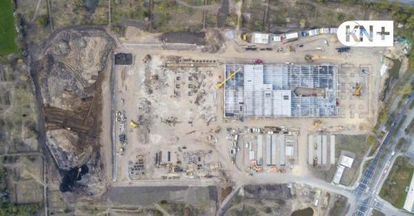 Gutachten zu unerlaubten Rodungen auf der Möbel-Höffner-Baustelle in Kiel liegt vor