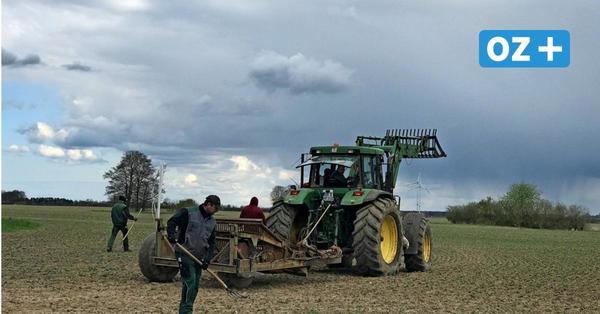 Landwirte aus Grimmen beklagen: Es ist zu trocken und zu kalt für die Pflanzen