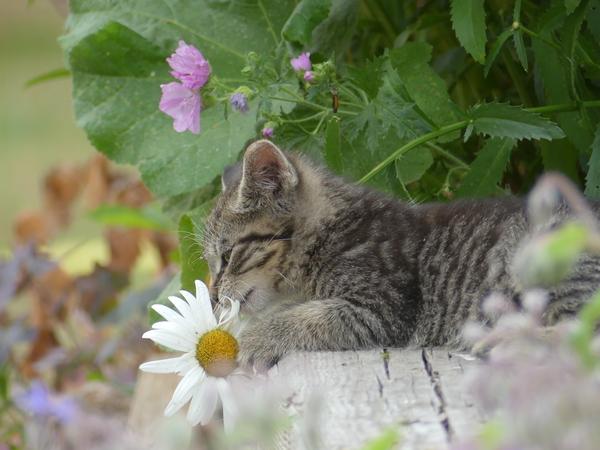 Wie niedlich! Ein Kitten spielt mit einer Blume (Foto: Melanie Ploetz)