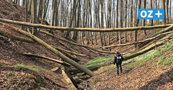 Tolles Ausflugsziel in Nordwestmecklenburg: Die Schlucht von Tatow