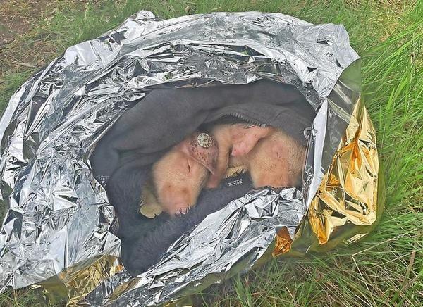 Die drei lebend aufgefundenen Tiere mussten später ebenfalls getötet werden. (Foto: Kay Harzmann)