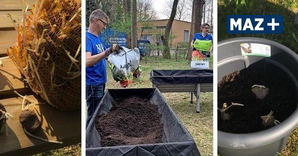 Das MAZ-Hochbeet: Der Blog zum Garten-Projekt mit Tipps und Tricks für den Gemüseanbau