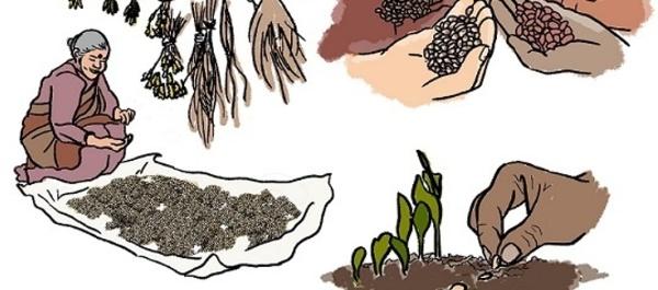 Open Access Booklet, SDG's 2,13: Una nueva guía para promover el derecho a las semillas