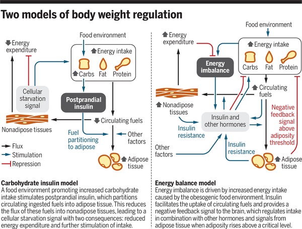 Carbohydrates, insulin, and obesity | Science