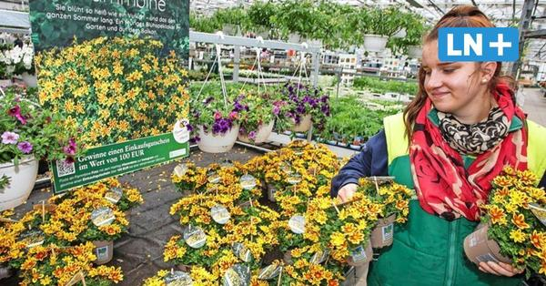Ostholsteins Experten geben Tipps: So werden Balkon und Garten bunter