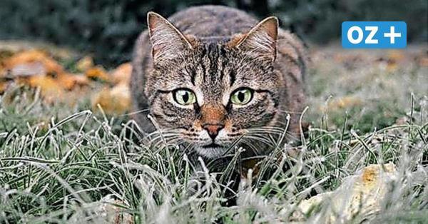 Katzenschutzverein Kühlungsborn fordert eingefangene Tiere zurück