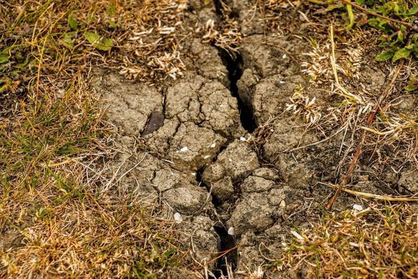 Plusieurs communes reconnues en état de catastrophe naturelle à cause de la sécheresse - Droogte erkend als natuurramp in verschillende gemeenten