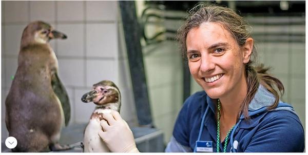 Ozeaneum Stralsund: Elf Fakten, die man über Merkels Pinguin wissen sollte
