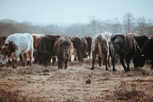 Demand for Farmland Fueled by Grain Rally