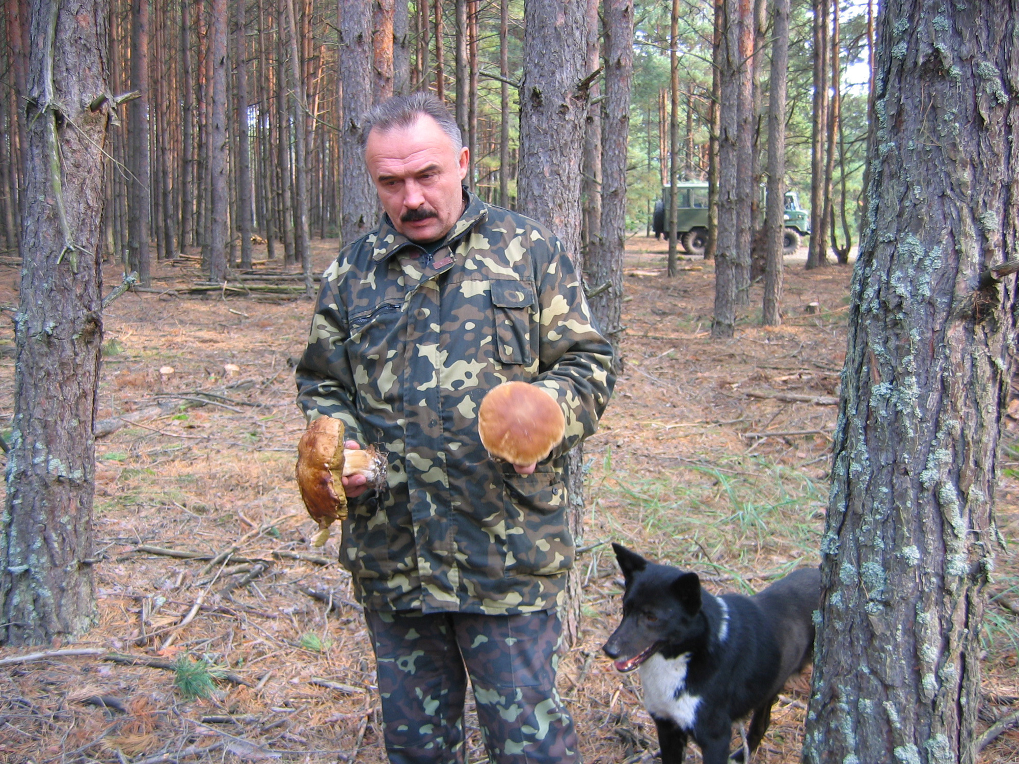 © Galia Ackerman. Dans la forêt de Tchernobyl. Ces énormes bolets sont beaux, mais immangeables.