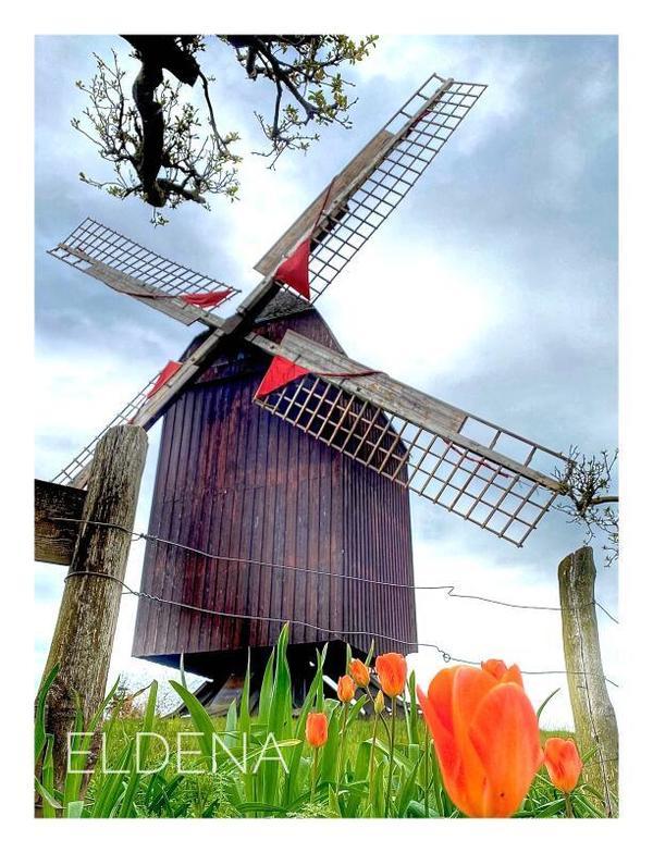 Farbklecks vor der Bockwindmühle Eldena (Foto: Christin Lokat)