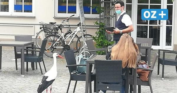 Schnorrer-Storch und Pöbel-Alpaka: Kurioses aus dem Greifswalder Tierpark