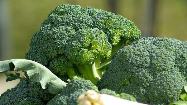 Jetzt aussäen und schon bald ernten: Superfood Brokkoli aus dem Garten oder vom Balkon