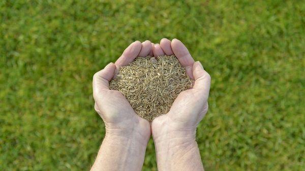 Rasen säen: Wie, wann und womit? So geht es richtig - Schritt für Schritt Anleitung