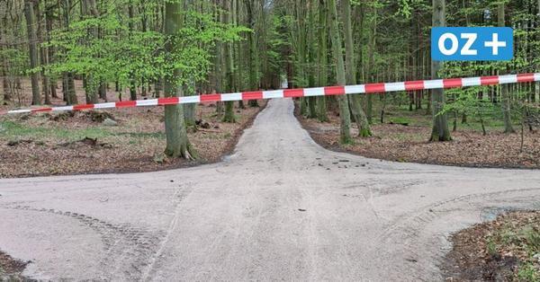 Gute Nachricht für Radfahrer: Forst lässt Waldwege auf Usedom instandsetzen