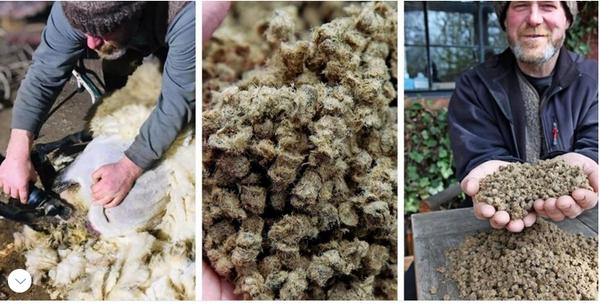 Wegen Krise auf dem Weltmarkt: Usedomer Schäfer macht Wolle zu Düngemittel