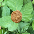 Doc Searls Weblog · How the cookie poisoned the Web