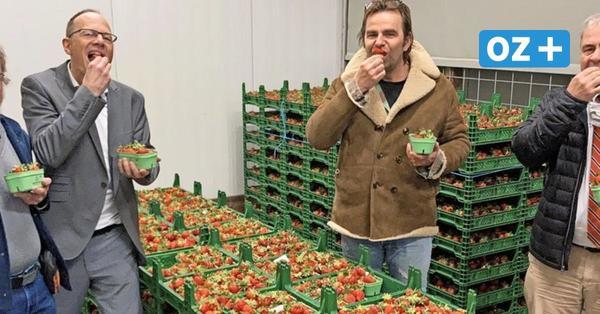 """Monatelang kostenlose Erdbeeren: """"Karls"""" sucht Testesser für Studie"""