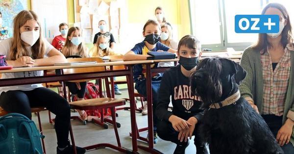 Neuer Kamerad für Schüler in Bad Doberan: Hündin Laska sitzt jetzt mit im Unterricht