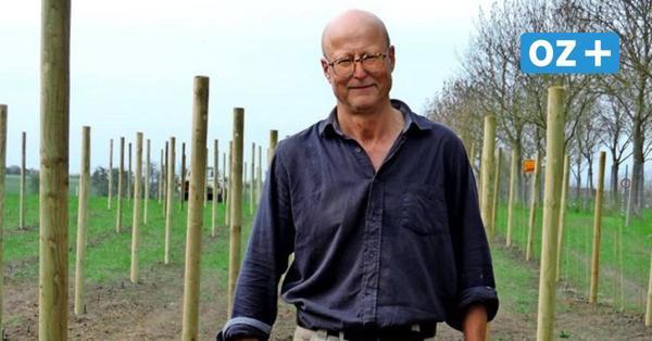 Weingut auf Usedom: Hier reifen Reben aus Asien und den USA