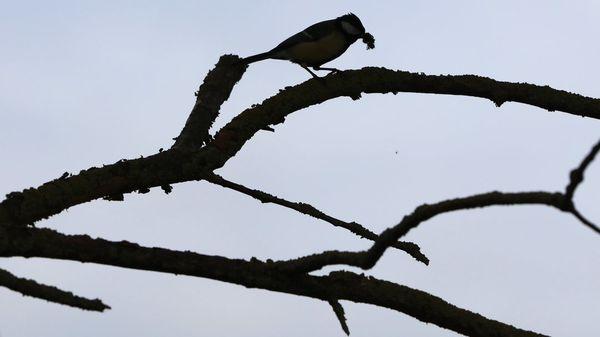 """Noch etwa 50 Milliarden Vögel auf der Erde: """"Alarmsignal für das Ökosystem"""""""