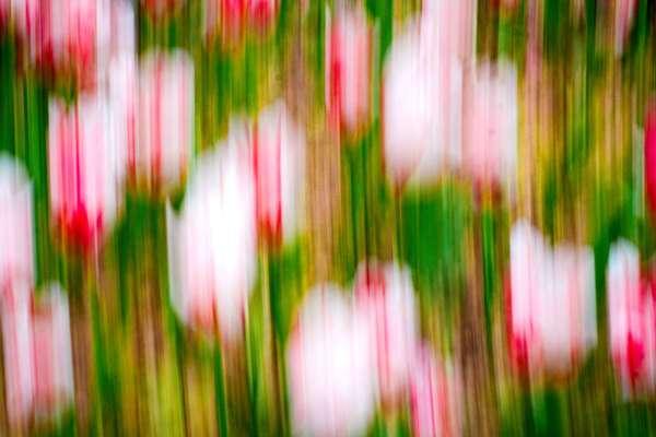 Tulip Mania, New York City, 7 May 2021. Intentional Camera Movement.