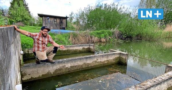 Fieser Fischzug: Diebe plündern Karpfenteich in Harmsdorf