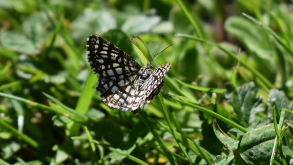 Kleine große Wunder der Natur (Foto: Corinna Schaak)