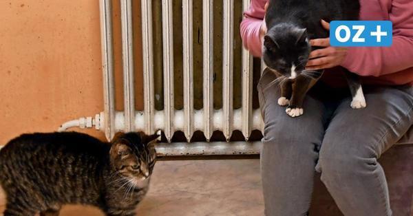 Tiernotstation Rügen: Einbrecher stehlen Spendengelder