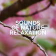 Sounds of Nature Relaxation   Spotify