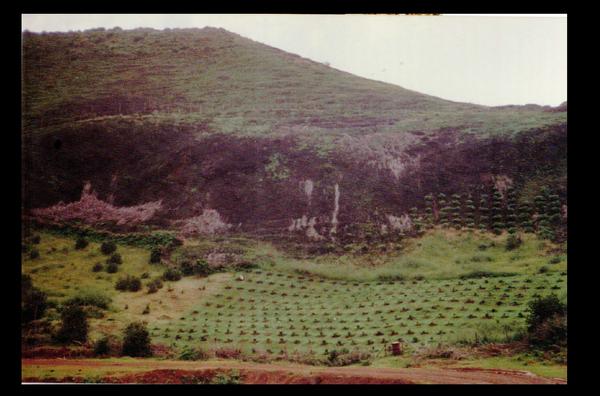 Paysage de Rapa (archives personnelles de JW)