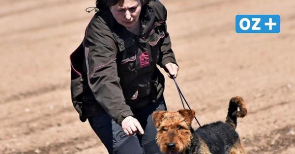 Beste Spürnase von Grevesmühlen: Fährtenprüfung beim Hundesportverein