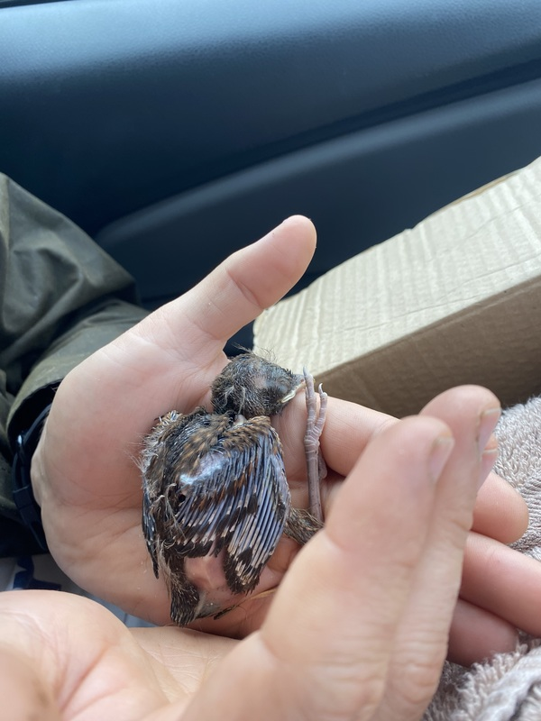One live baby bird!