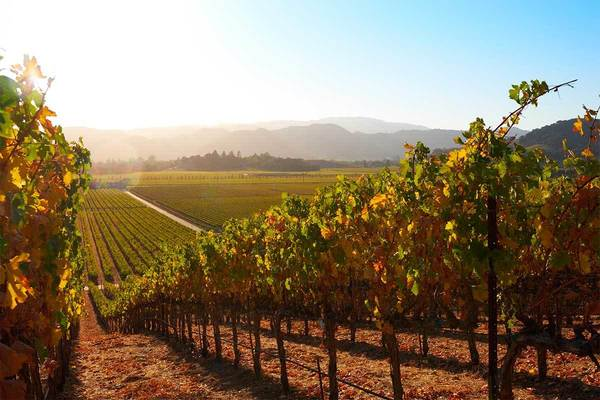 Napa Valley sees wine grape production plummet amid wildfires, pandemic