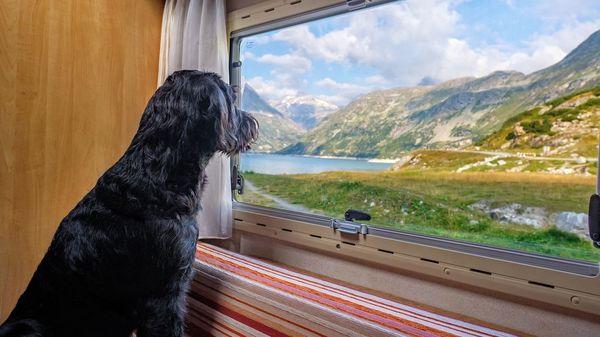 Hundecamper mieten: So geht Urlaub mit Wohnmobil und Haustier