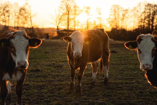 Grass-fed: a Label Ingrained with Misleading Claims