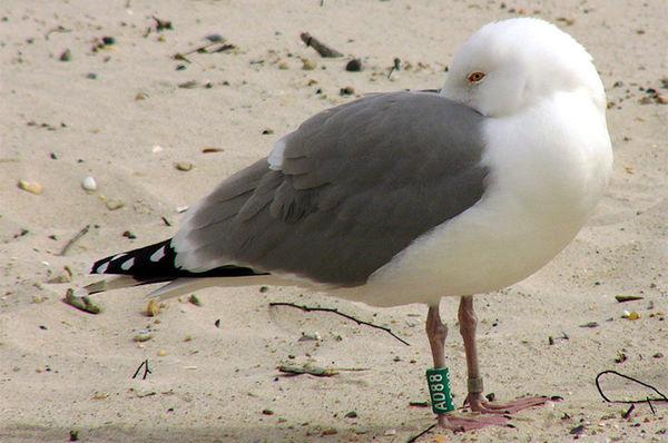 100-Years of Bird Banding